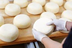乳酪商检查的年轻乳酪轮子 库存照片