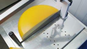 乳酪在工厂的切割机 股票录像