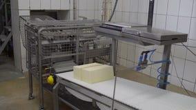 乳酪生产技术  乳酪包装的过程的传动机线 处理在食物工厂的乳酪 影视素材
