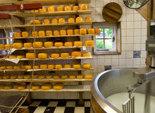 乳酪生产 库存照片