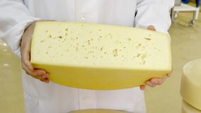 乳酪的生产 影视素材