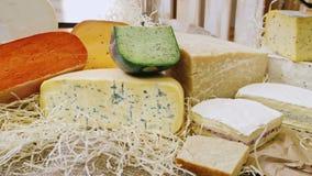 乳酪精品店 不同的品种开胃乳酪片断在柜台说谎 影视素材