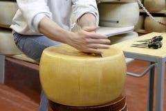 乳酪轮子  免版税库存图片