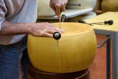 乳酪轮子  库存图片