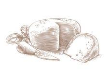 乳酪头与刀子和新鲜的蓬蒿的 皇族释放例证