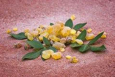 乳香密友传记Papyrifera,树脂和叶子,香火f 库存照片