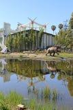 乳齿象- La Brea 库存图片
