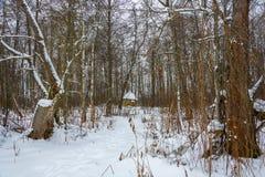 了不起的受难者Paraskeva的圣洁春天在冬天森林 免版税库存照片