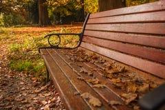 了不起的秋天在晴朗的公园,说谎在长凳的叶子 免版税库存图片