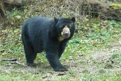 戴了眼镜的熊 免版税库存图片