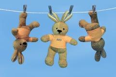 事业野兔 免版税库存图片