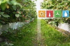 事互联网在农业技术和聪明的种田的概念 免版税图库摄影
