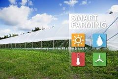 事互联网在农业技术和聪明的种田的概念 免版税库存照片