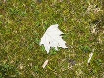 事假的自然纹理在草的 免版税库存照片
