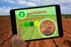 事农业概念、被增添的现实、农夫用途片剂和ar应用互联网在有预测性领域的估计 免版税库存图片
