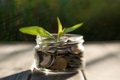 事务和硬币成长  家庭储款的发展的概念 免版税图库摄影