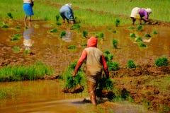 事务在印度 犁米领域的农夫 免版税库存图片