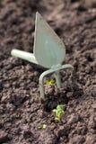 从事园艺。锄和新芽 免版税库存图片