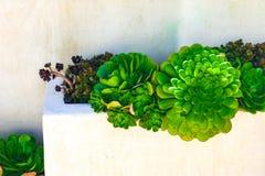 从事园艺与充满活力的绿色植物的容器反对白色背景 免版税库存照片