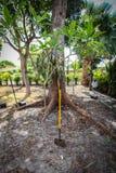 从事园艺和环境美化在佛罗里达 库存图片