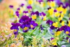 从事园艺和环境美化 免版税库存图片