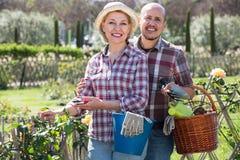从事园艺在后院的年长夫妇 免版税库存图片