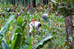 从事园艺在热带 库存照片