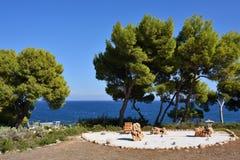 从事园艺在爱琴海海岸, Attica,希腊 免版税图库摄影