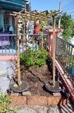 从事园艺在菜园在议院里 免版税库存照片