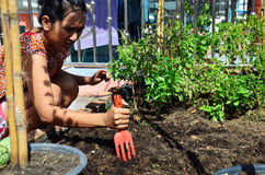 从事园艺在菜园的泰国妇女在议院里 库存照片