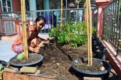 从事园艺在菜园的泰国妇女在议院里 免版税库存图片