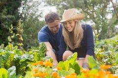 从事园艺在晴天的逗人喜爱的夫妇 图库摄影