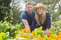 从事园艺在晴天的逗人喜爱的夫妇 免版税库存图片