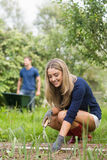 从事园艺在晴天的逗人喜爱的夫妇 库存照片