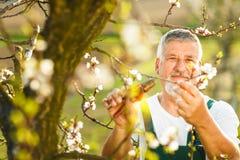 从事园艺在他的庭院里的一名英俊的老人的画象 库存图片