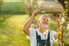 从事园艺在他的庭院里的一名英俊的老人的画象 库存照片