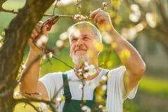从事园艺在他的庭院里的一名英俊的老人的画象 免版税图库摄影