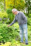 从事园艺在他的庭院里的人 免版税图库摄影