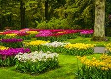 从事园艺在Keukenhof、五颜六色的郁金香花和树 荷兰 免版税库存照片