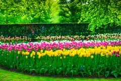 从事园艺在Keukenhof、郁金香花和树。荷兰 免版税库存图片