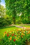 从事园艺在Keukenhof、郁金香花和树 荷兰 免版税库存图片