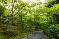 从事园艺在Tenryu籍寺庙,京都,日本 图库摄影