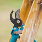 从事园艺的剪枝夹细节在一架从事园艺的梯子挂掉电话 库存照片