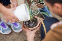 从事园艺的种植 免版税库存照片