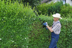 从事园艺,切开树篱 免版税库存照片