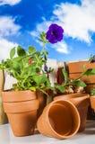 从事园艺,自然题材的概念 库存图片
