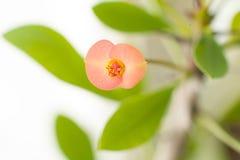 从事园艺flowers5 免版税库存照片