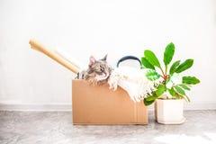 事移动的,在箱子的一只猫,在一个罐的一朵花在白色背景车库售物和移动的概念复制空间 免版税图库摄影