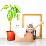 事移动的,在箱子的一只猫,在罐的一朵花,在白色背景车库售物的老框架和移动的概念复制空间 免版税库存图片