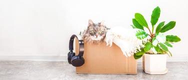 事移动的,在箱子的一只猫,在罐jn的一朵花白色背景车库售物和移动的概念复制空间横幅 库存照片